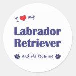 Amo a mi labrador retriever (el perro femenino) pegatinas redondas
