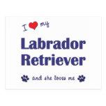 Amo a mi labrador retriever (el perro femenino) tarjeta postal
