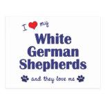Amo a mis pastores alemanes blancos (los perros mú postales