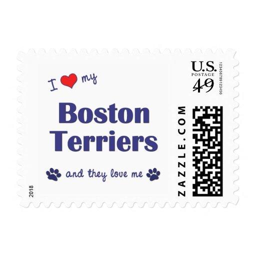 Amo a mis terrieres de Boston (los perros múltiple