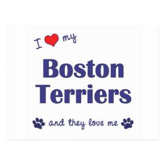 Amo a mis terrieres de Boston (los perros Tarjetas Postales