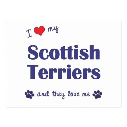 Amo a mis terrieres escoceses (los perros múltiple postal