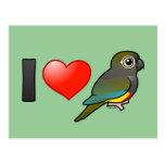 Amo a patagón Conures Postal