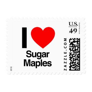 amo arces de azúcar envio