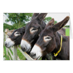 ¡Amo burros! Felicitación