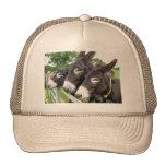 ¡Amo burros! Gorras