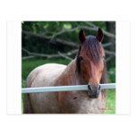 ¡Amo caballos! Postal