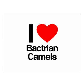 amo camellos bactrianos postal