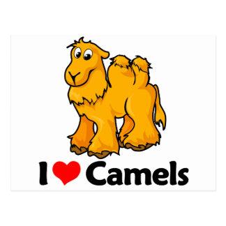 Amo camellos postal