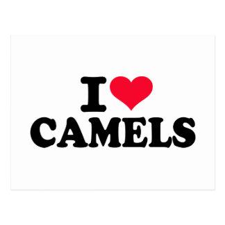 Amo camellos postales