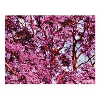 Amo Camo rosado al lado del país de Mishas Postales