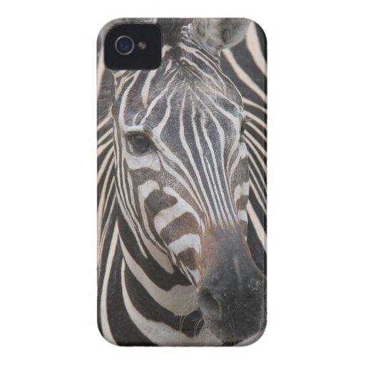 ¡Amo cebras! Cara imponente en iPhone iPhone 4 Case-Mate Cárcasa