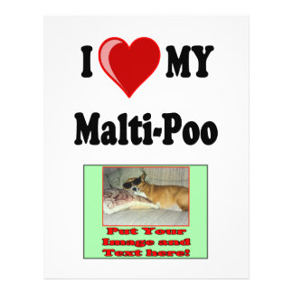 """Amo (corazón) mi perro de Malti-Poo Folleto 8.5"""" X 11"""""""