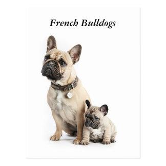 Amo dogos franceses postal