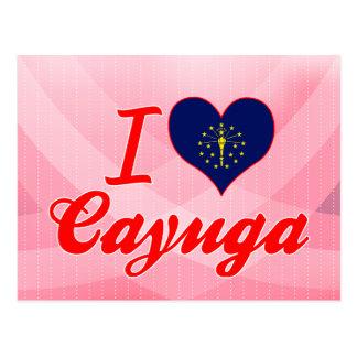 Amo el Cayuga Indiana