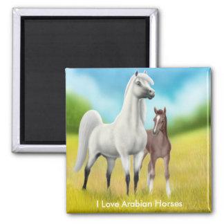 Amo el imán árabe de los caballos