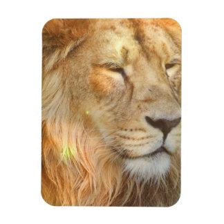 Amo el imán de los leones