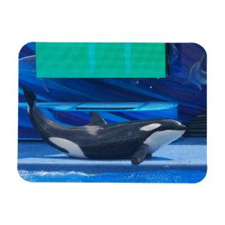 Amo el imán flexible de las orcas