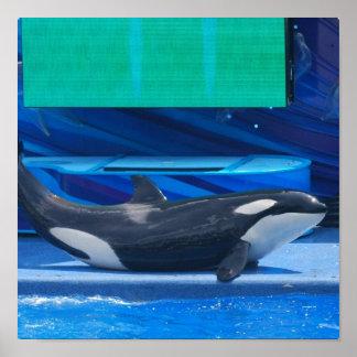 Amo el poster de las orcas