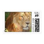 Amo el sello de los leones