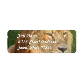 Amo etiquetas de correo de los leones etiqueta de remite