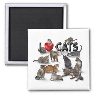 Amo gatos imán