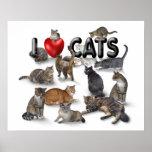 Amo gatos poster