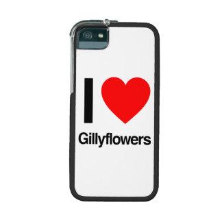 amo gillyflowers