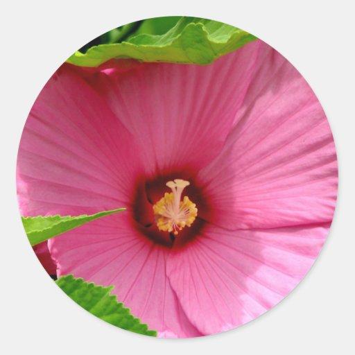 ¡Amo hibiscos! (Rosa de Sharon) Etiquetas Redondas