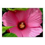 ¡Amo hibiscos! (Rosa de Sharon) Felicitación