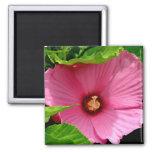 ¡Amo hibiscos! (Rosa de Sharon) Imán De Frigorífico
