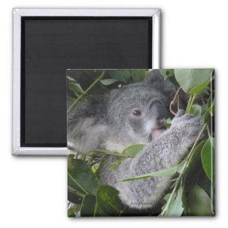 Amo koalas imán cuadrado