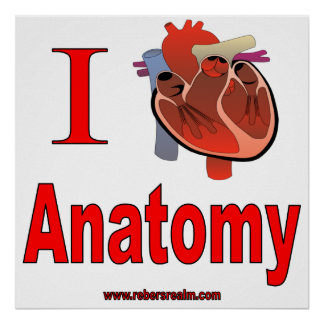 Amo la anatomía póster