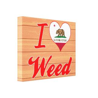 Amo la mala hierba California Lona Estirada Galerias