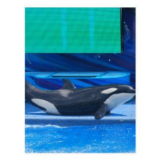 Amo la postal de las orcas