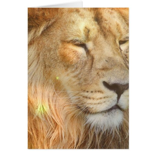 Amo la tarjeta de felicitación de los leones
