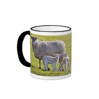 Amo la taza de las ovejas, ofreciendo 2 corderos