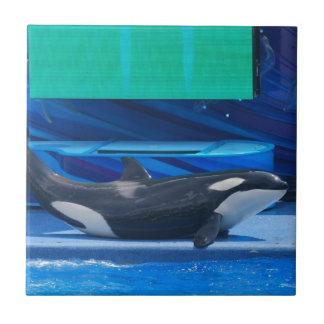 Amo la teja de las orcas