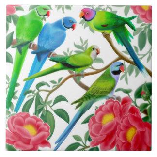 Amo la teja de los Parakeets