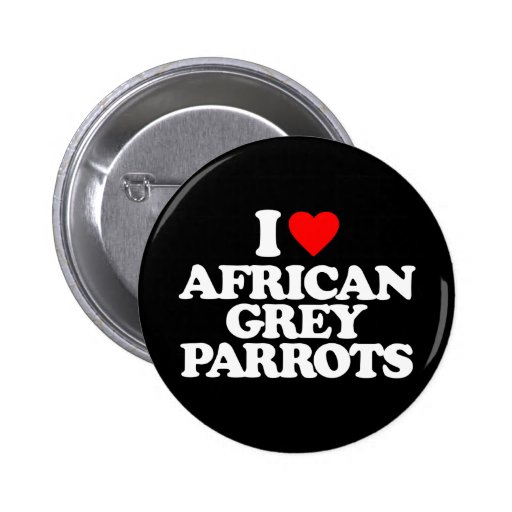 AMO LOROS DEL GRIS AFRICANO PINS