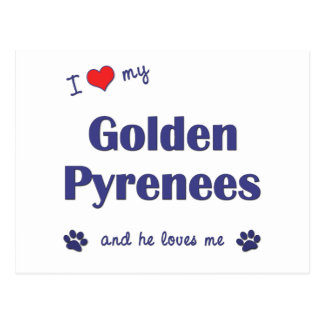 Amo los mis Pirineos de oro (el perro masculino) Postales