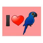 Amo Macaws del jacinto Tarjeta Postal