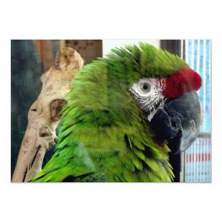 ¡Amo macaws! Invitación 12,7 X 17,8 Cm