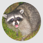 ¡Amo mapaches! Etiqueta Redonda