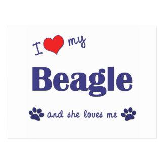 Amo mi beagle (el perro femenino) postales