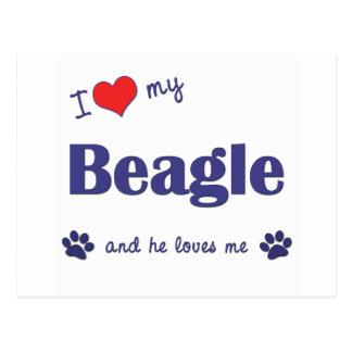 Amo mi beagle (el perro masculino) postal