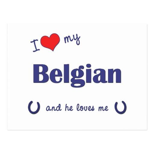 Amo mi belga (el caballo masculino) postal