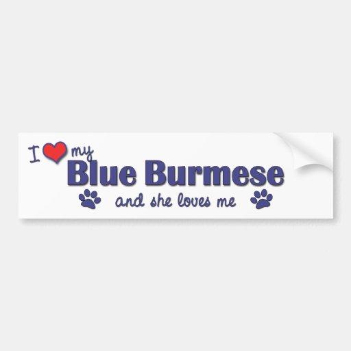 Amo mi birmano azul (el gato femenino) pegatina de parachoque