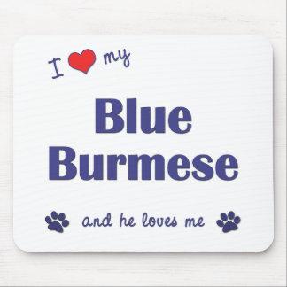 Amo mi birmano azul (el gato masculino) tapetes de ratón