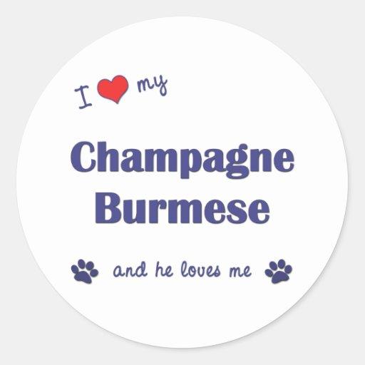 Amo mi birmano de Champán (el gato masculino) Pegatinas Redondas